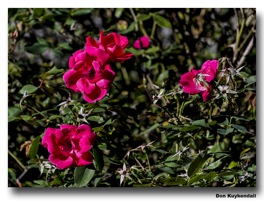 d7000 000181 by Don Kuykendall in Member Albums