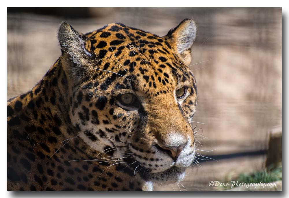 d71 0725 by Don Kuykendall in Member Albums