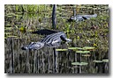 d71 2014 by Don Kuykendall in Member Albums