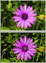 day228flower1a by Don Kuykendall in Member Albums