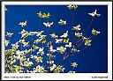 Dogwood by Don Kuykendall in Member Albums