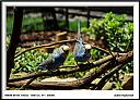 dsc 5705 1 by Don Kuykendall in Member Albums