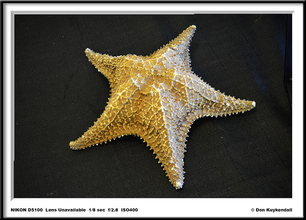 large star 1 by Don Kuykendall in Member Albums