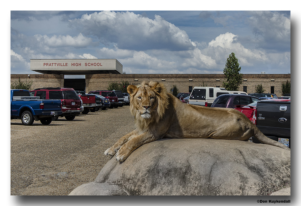 lion finsihed by Don Kuykendall in Member Albums