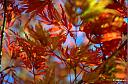 Abstract Leafs by robinchun in Member Albums