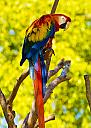 macaw by gqtuazon in Member Albums