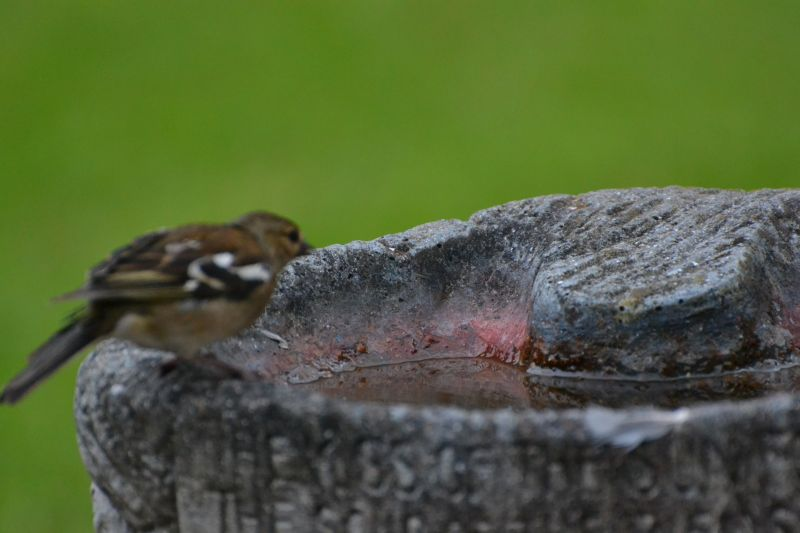 bird on bath 2 by jtkpenguin in 1st pics with 70-300mm lens