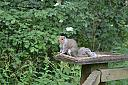 Squirrel by Toppers in Member Albums