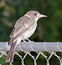 On the fence by NiknoDave in Member Albums