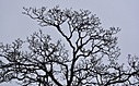 A Tree in Winter by TieuNgao in Member Albums