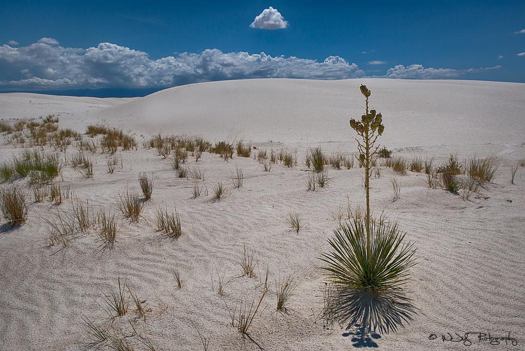 White Sands by Ruidoso Bill in Member Albums