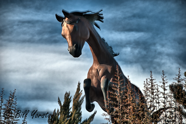 Horses - HDR by Ruidoso Bill in Member Albums