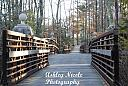 bridge to forest  by ans_photography in Member Albums