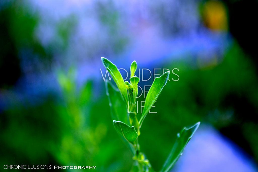 Wonder of Life by ChronicIllusionsTV in Member Albums