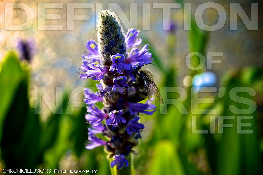 Definition of Nature's Life by ChronicIllusionsTV in Member Albums