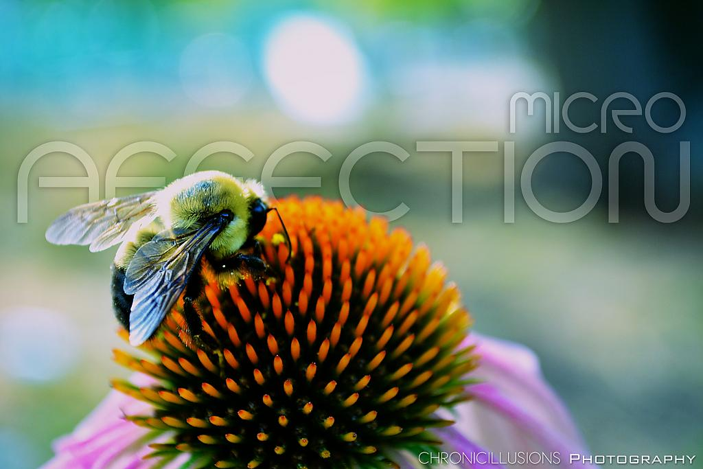 Micro Affection by ChronicIllusionsTV in Member Albums