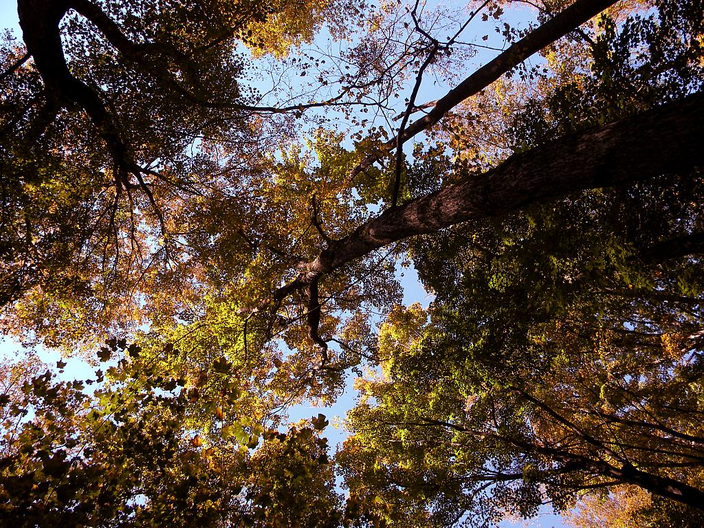 Can you hear the leaves falling? by theairwebreathe in Member Albums