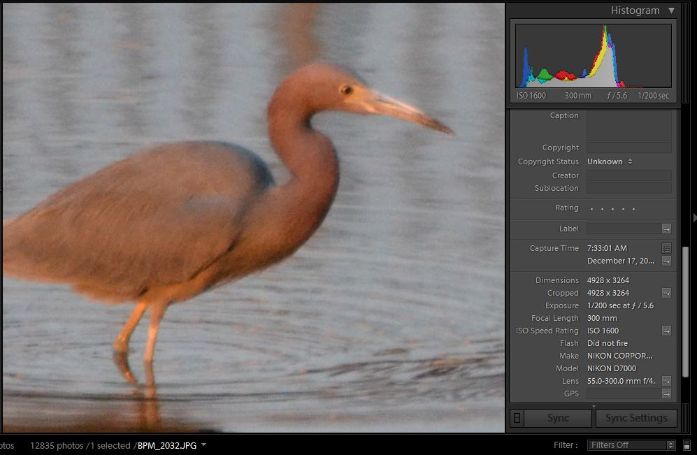 High ISO Comparison by PapaST in Member Albums