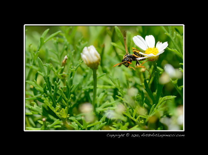 Wasp by Photowyzard in Member Albums
