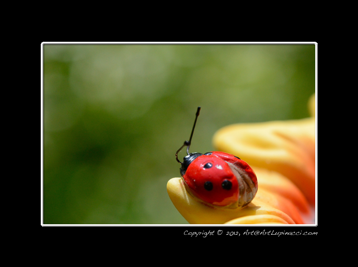 Porcelain Lady Bug by Photowyzard in Member Albums