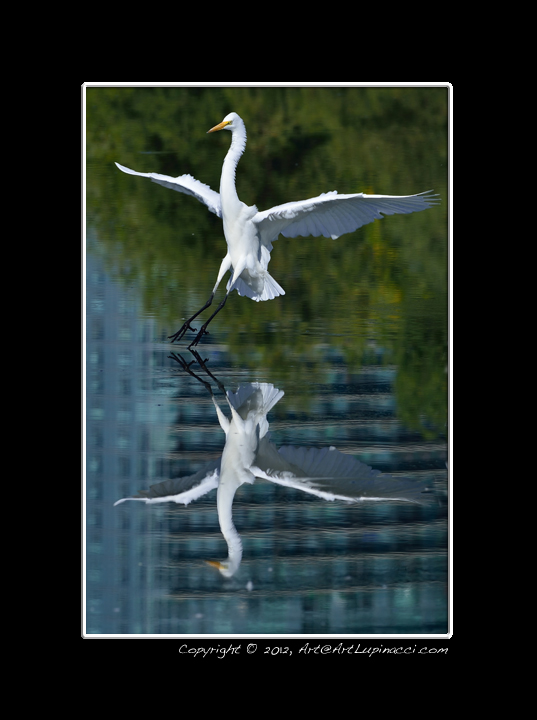 Touchdown by Photowyzard in Member Albums