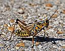 Take the pebble from my hand grasshopper by grandpaw in Member Albums