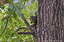Squirrel having lunch in a tree. by grandpaw in Member Albums