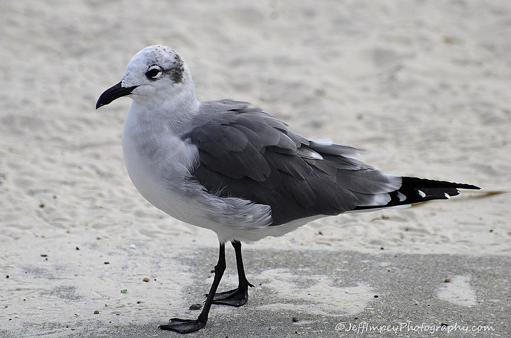 Seagull by grandpaw in Member Albums