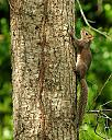 Greay squirrel up a tree by grandpaw in Member Albums