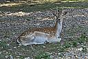 Vacation photos that are deer to my heart by grandpaw in Member Albums