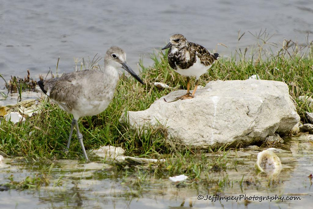 Two birds at wayers edge by grandpaw in Member Albums