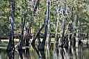 Pascagoula River by grandpaw in Member Albums