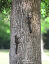 I'm up a tree by grandpaw in Member Albums