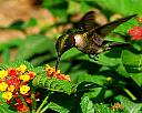 Humming bird at lunch by grandpaw in Member Albums
