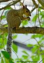 Squirrel at lunch by grandpaw in Member Albums