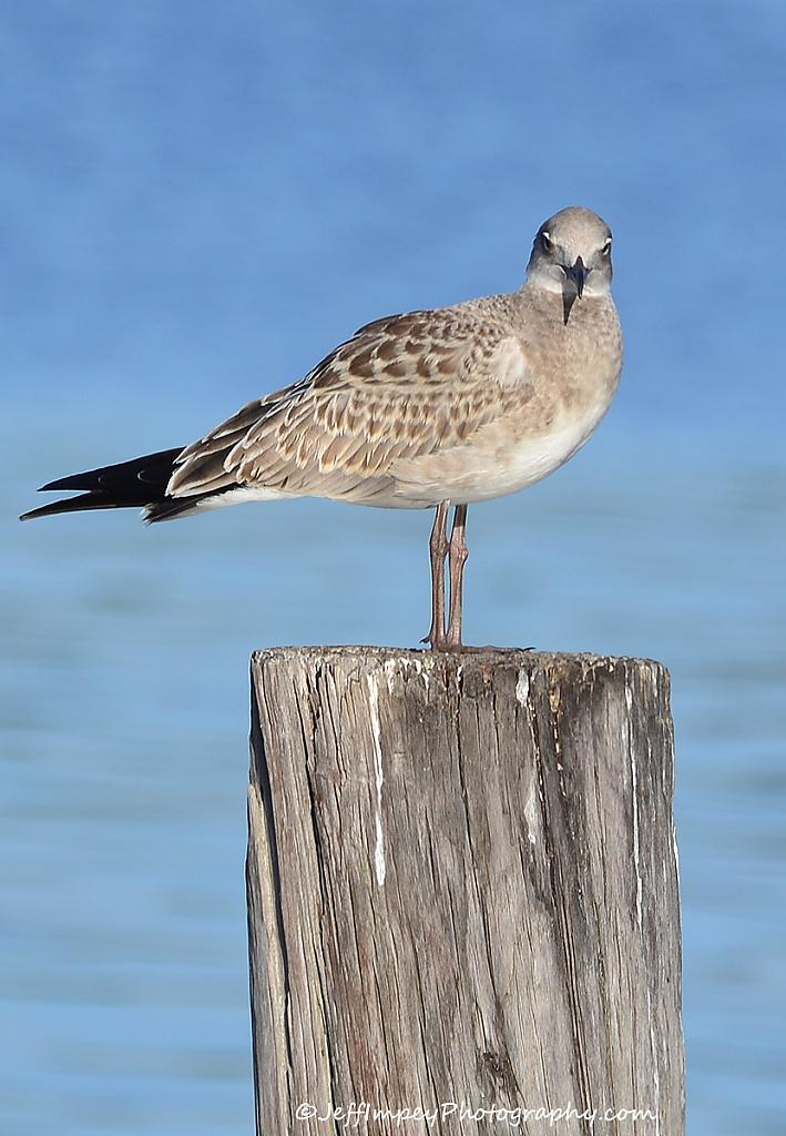 Bird on a post by grandpaw in Member Albums