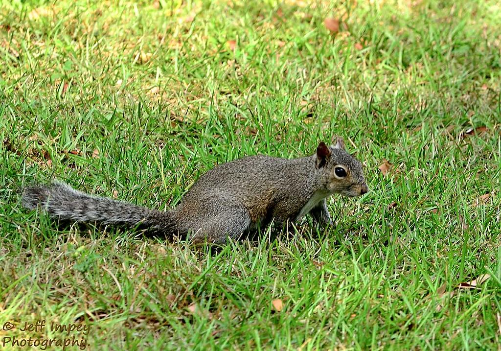 Looking for nuts by grandpaw in Member Albums