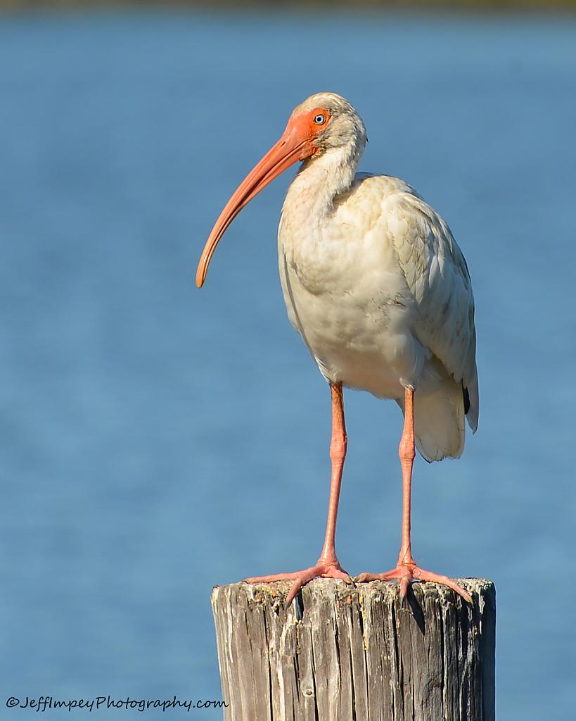 Crop of a Ibis out on the water by grandpaw in Member Albums