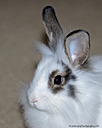 Portrait of a rabbit by grandpaw in Member Albums