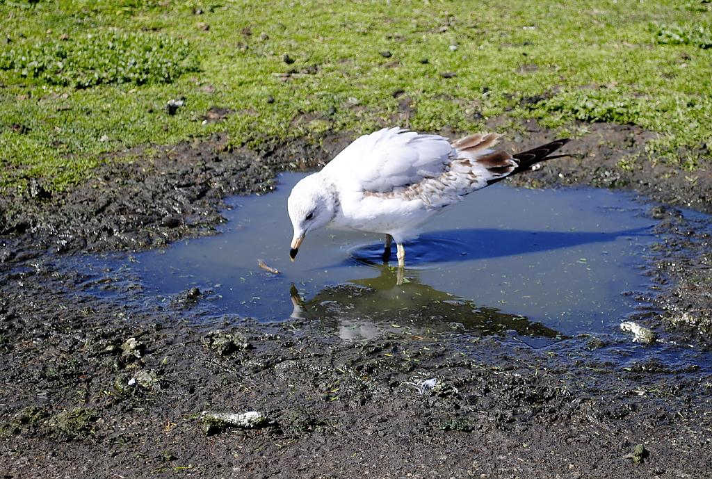 Mud Puddle Lunch