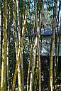 Bamboo Forest by Sakkasie in Member Albums