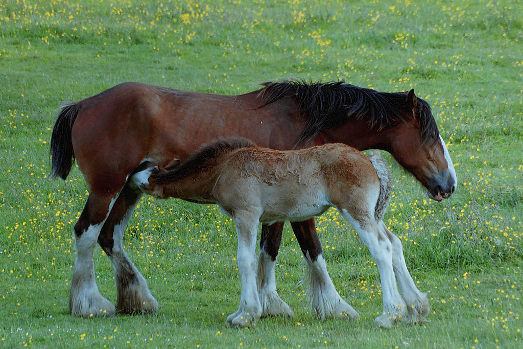 Mother and foal by nikonjim in Member Albums