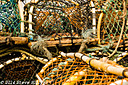 Lobster Pots by SteveH in Steve's Shots