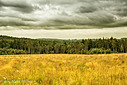 Stormy Forest by SteveH