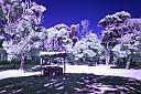 Infrared Picnic table