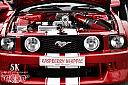 Ford Shelby GT500 Mustang by Sophy in Member Albums