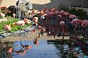 Pink Flamingos by Danteblue in Member Albums