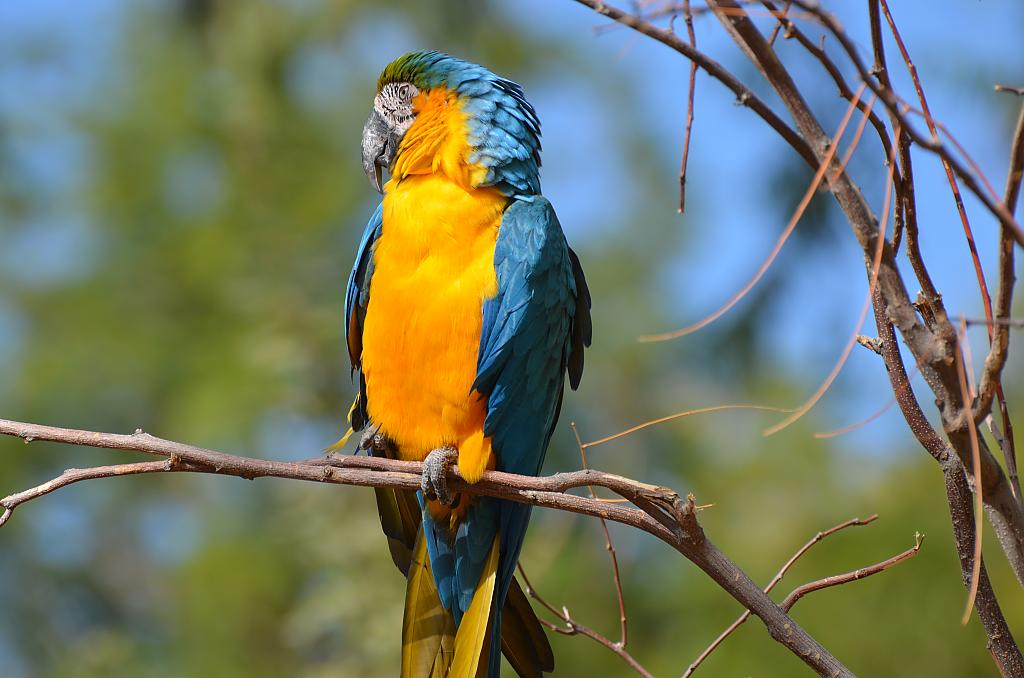 King Of The Amazon by Danteblue in Member Albums