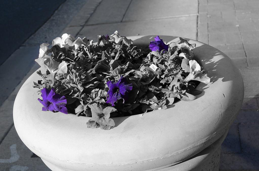 Purple Flowers in B&W