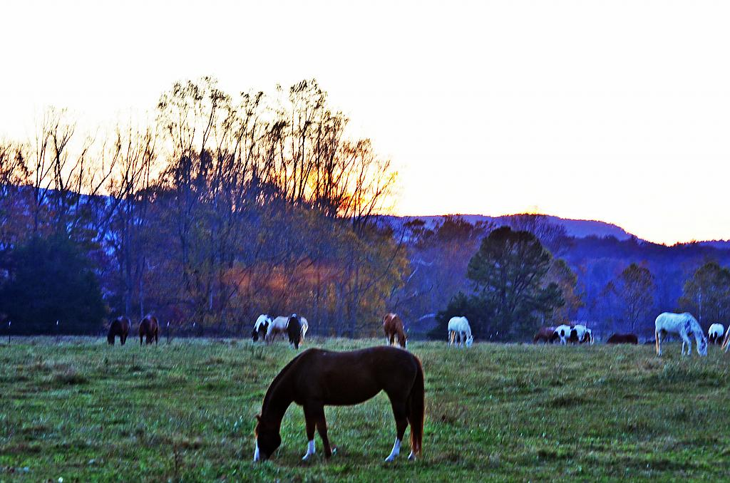 Horses at dusk Cades Cove by Debrus in Member Albums